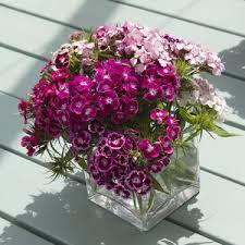 Một chậu hoa có thể làm điểm nhấn cho khu vườn của bạn