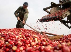 Nông sản Việt tái cơ cấu