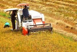 Nông sản thay đổi chính sách
