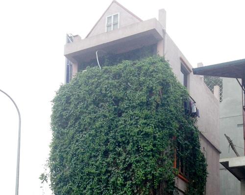 Trang trí ngôi nhà đẹp cùng với hàng rào xanh mướt