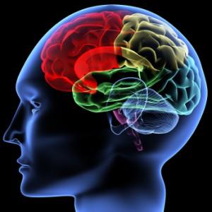 Rèn luyện trí não