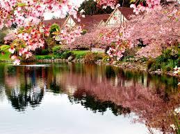 Sakura Valley thiên đường tận hưởng với gia ưu đãi
